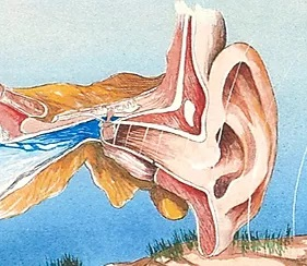 Open, Patulous Ear